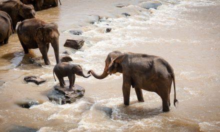 Az önzetlenség magasiskolája: állat ment állatot