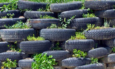 Félreértett kertészkedés – az autógumik tündöklése és várva várt bukása