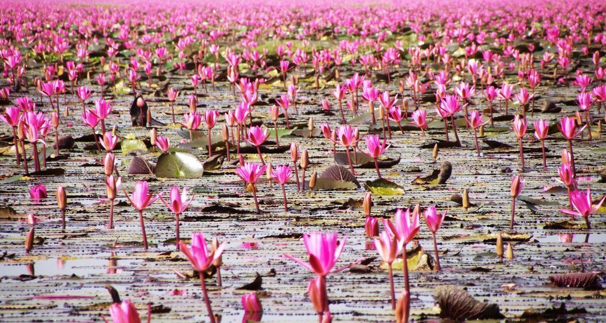 A világ legszebb lebegő virágoskertje