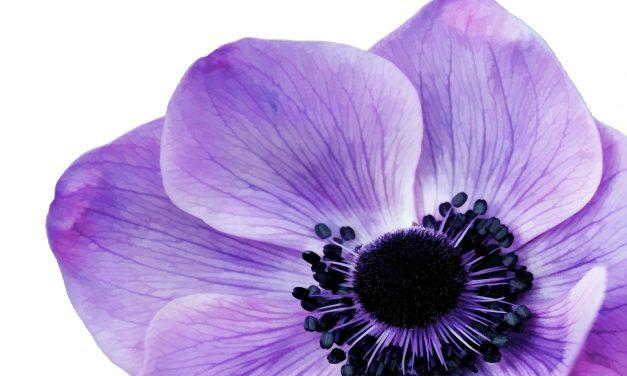 Légy trendi, de maradj eredeti – szobanövények az év színében