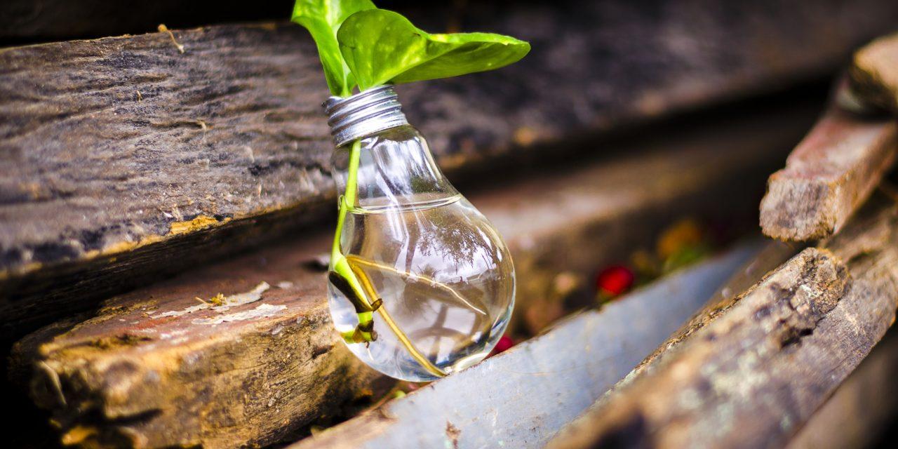 Nincs kerted? Nem kifogás! – Alternatív termesztési módszerek a nagyvilágból
