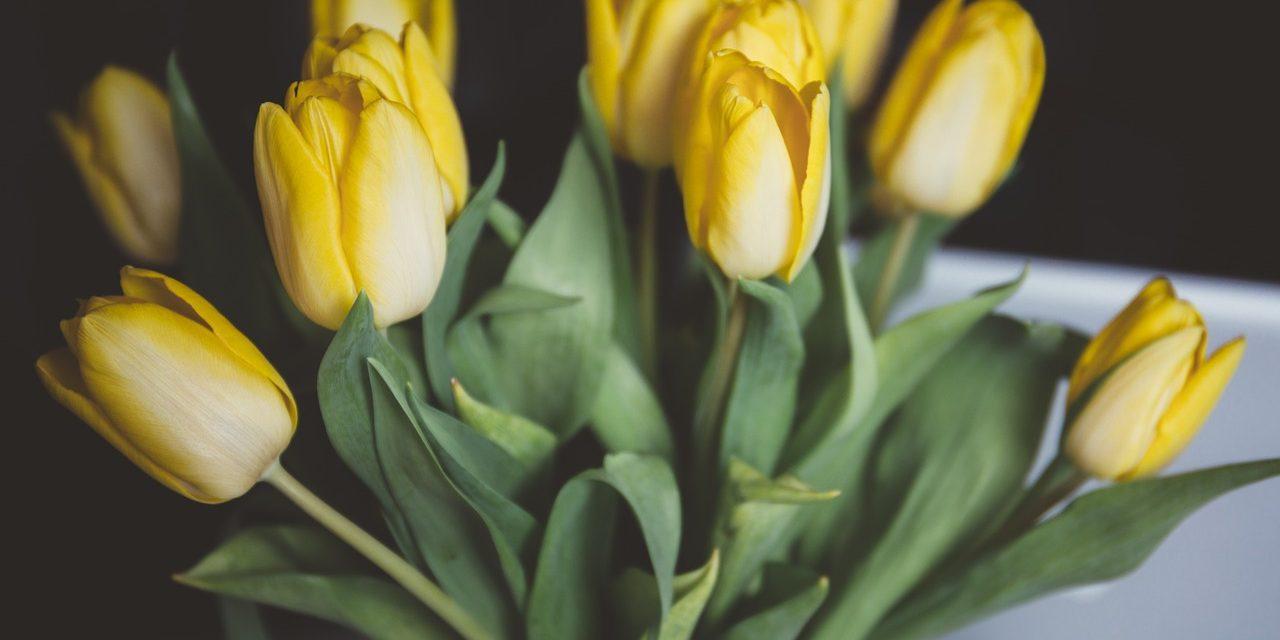 Sok csodás virág, csak legyen elég váza: tulipán