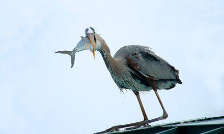 Most olyat láthatsz, amit még soha: különleges téli madárlesek