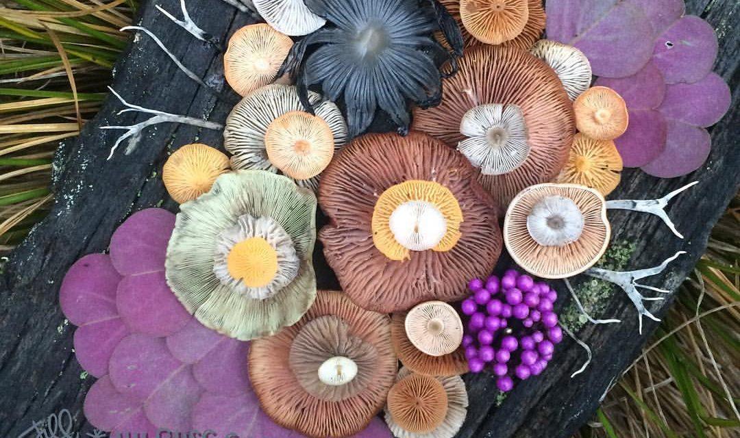 Mágikus csokrok gombákból és zuzmókból
