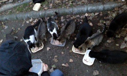 Így mentsd meg a kóbor macskákat!