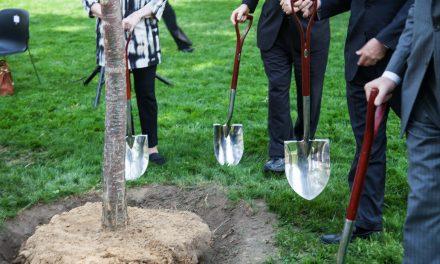 Balatonföldváron öt évig ültetik a fákat