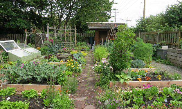 Belevágna egy zöldségeskertbe, de nem tudja, hogyan? Letölthető tervekkel tuti a siker!