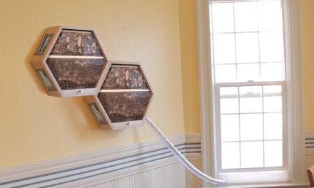 Egy méhkaptár a nappaliba? Semmi akadálya, itt a BEEcosystem!
