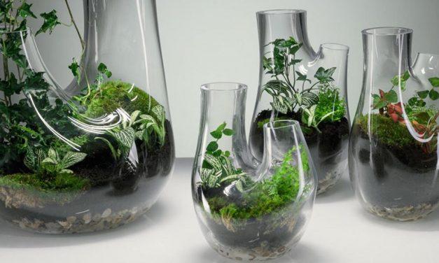 Gyönyörű üvegvázákba varázsolt kertek