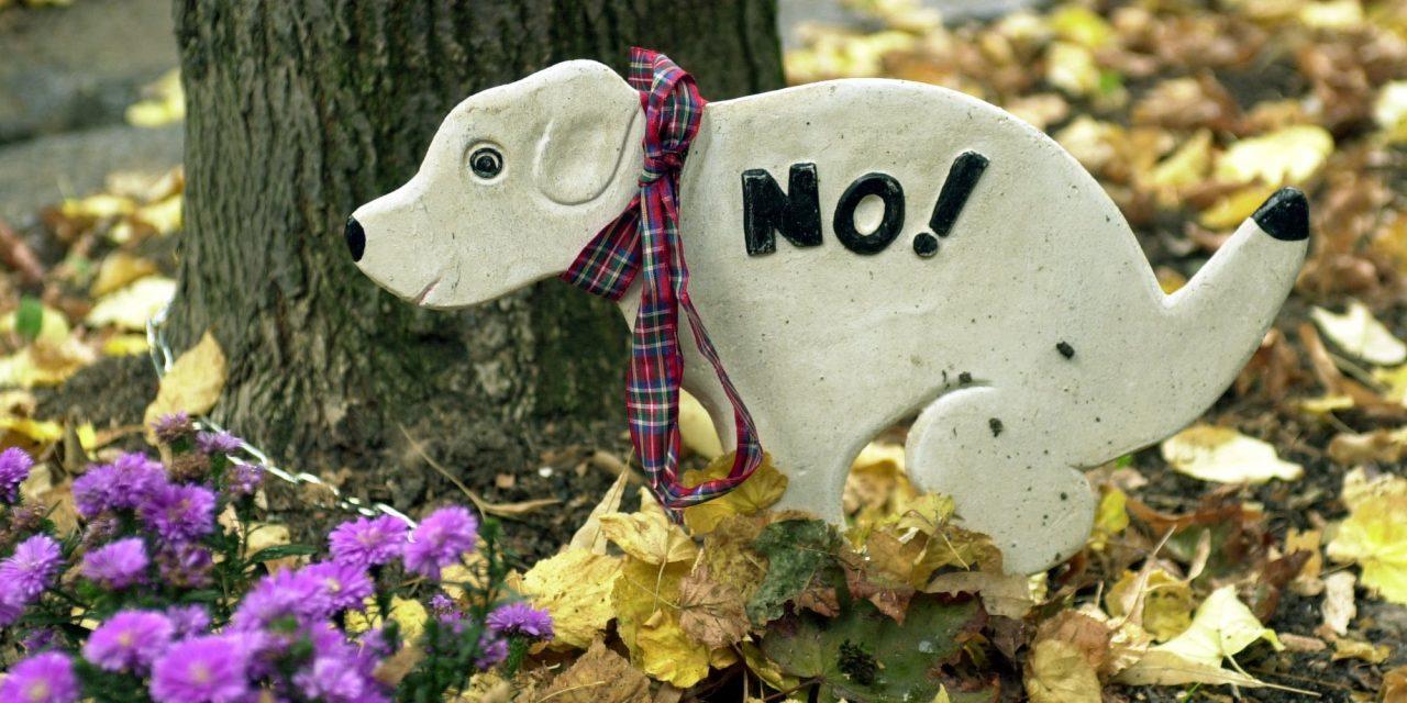 Bécs megoldotta a kutyagumi-problémát