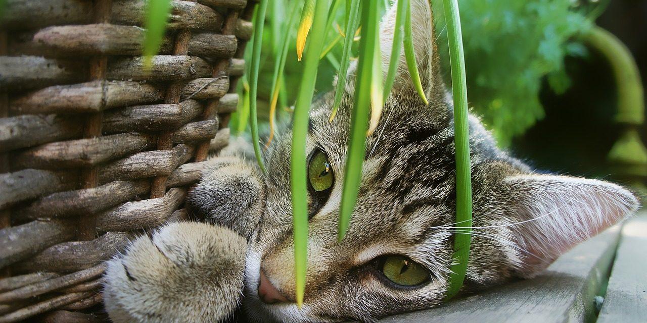 Miért ne lehetne a macskának saját kertje?