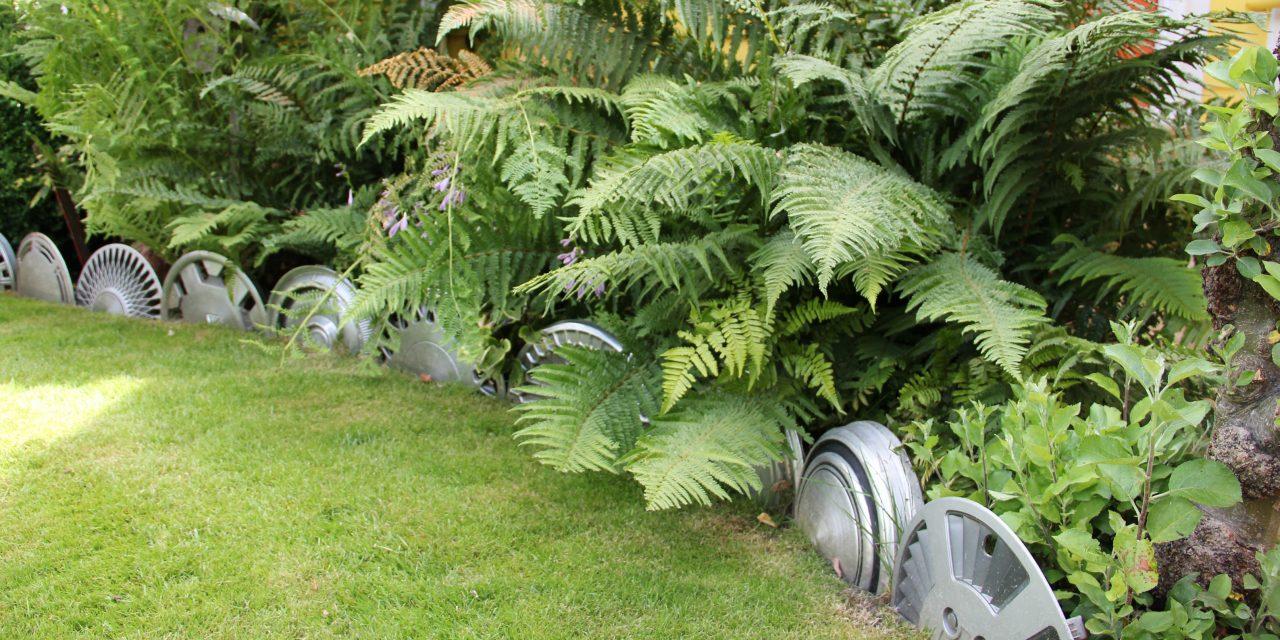 Félreértett kertészkedés: a dísztárcsa