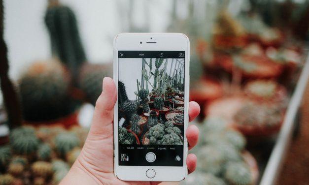Kipróbáltuk helyetted: mobilalkalmazások kertészeknek
