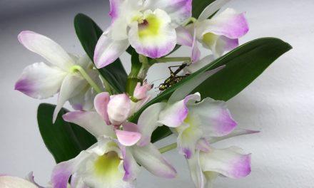 Van orchidea, amelyik élve megeszi áldozatát. Jobb, ha vigyázol!