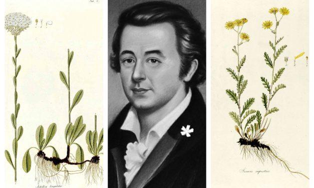 Elfeledett hősök: Kitaibel Pál, a magyar Linné
