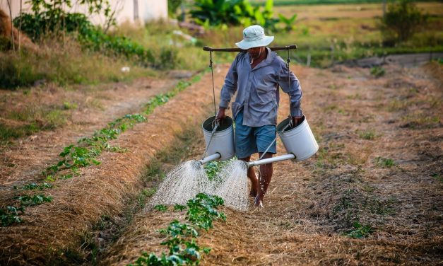 5 tipp a víztakarékos kertért
