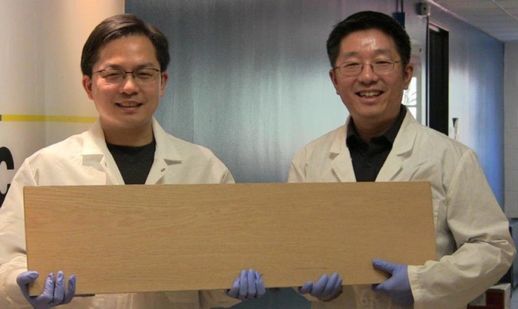 Eljött a fából vaskarika ideje: itt az új szuperfa, ami olyan erős, mint az acél