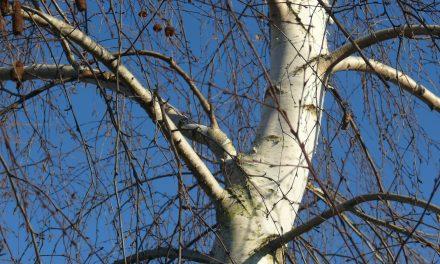 11 fa, amitől jövő télen szép lesz a kerted