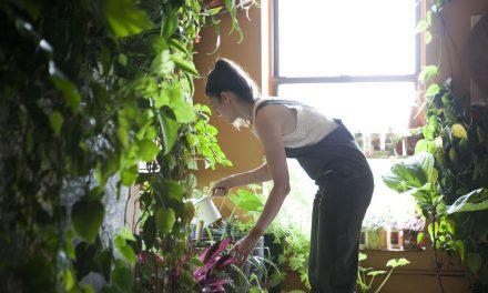 Az őrült növényes csaj lakása elképesztő: ennyi szobanövénye senkinek nincs!
