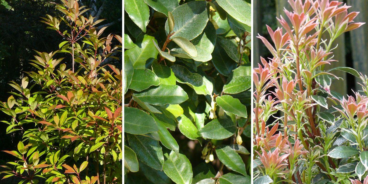 22 cserje, hogy jövő télen szebb legyen a kerted