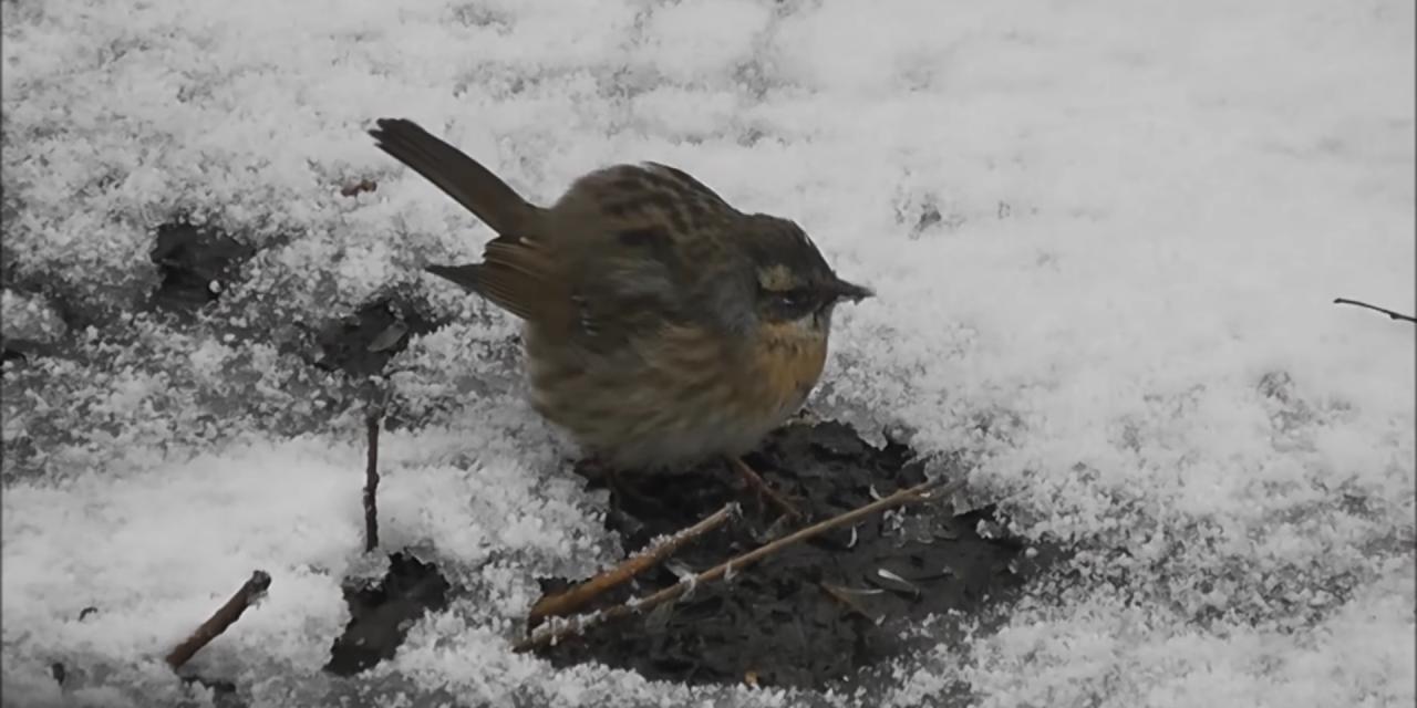 Soha nem látott ázsiai madárfaj tűnt fel Magyarországon