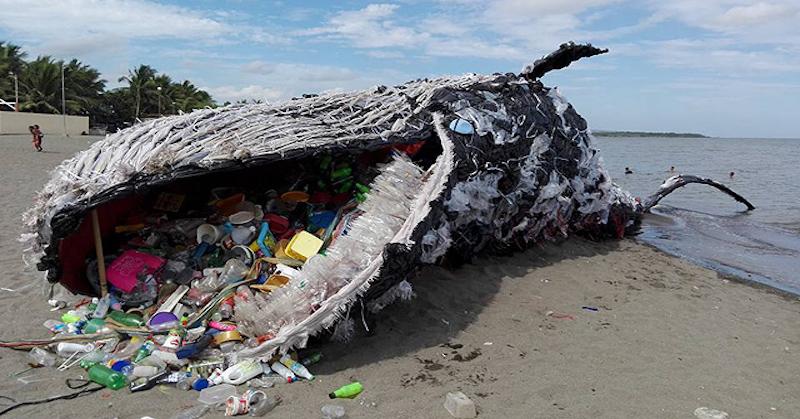 Szeméttel teli bálnát vetett partra a víz