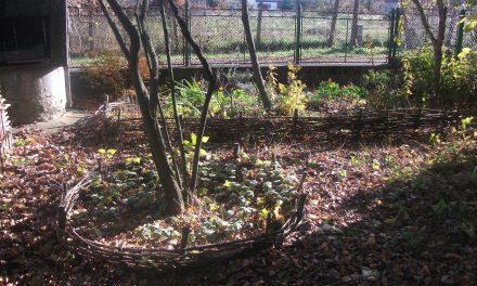 Élelemtermő erdőkert, a jövő kertje