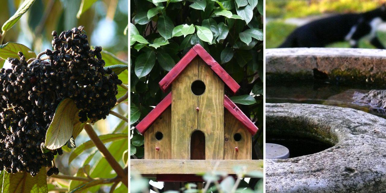 Így lesz madárbarát a kerted