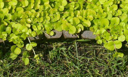 Egy igazán fontos kérdés – Mi legyen a kerti szegély?