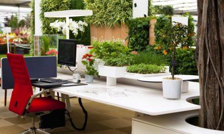 A zöld iroda 5 jótékony hatása