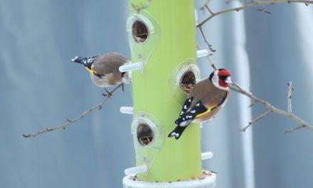 Így ne etesd tovább a kert madarait