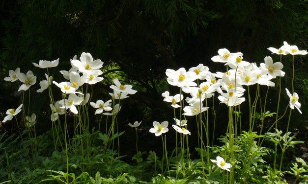 Tervezzünk tavaszi virágágyat!