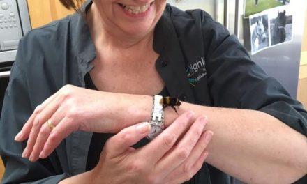 A szárny nélküli méhkirálynő és a nő barátsága