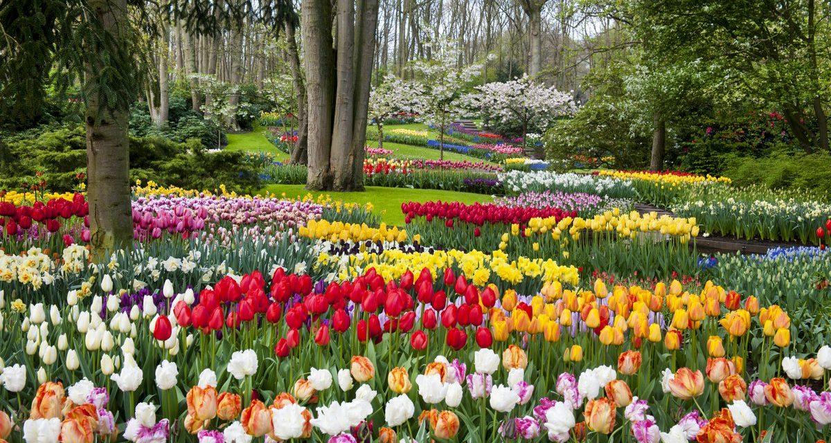 Most nyílik a világ legnagyobb virágoskertje