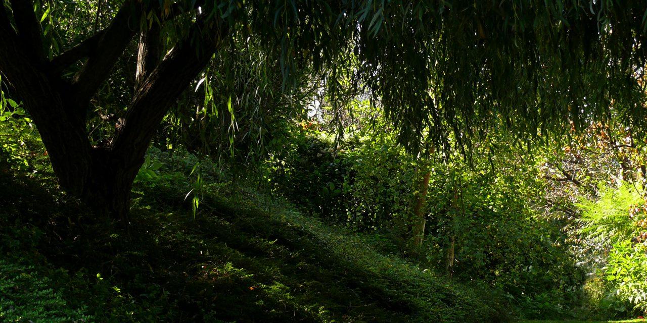 Kertészkedős tévhitek: fák alatt nem kell öntözni
