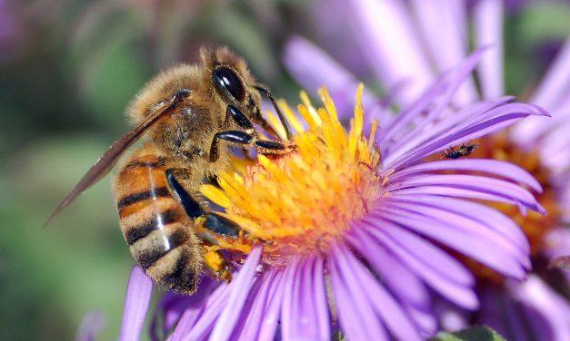 Hogyan szelídítsünk méheket? Adjunk nekik enni!