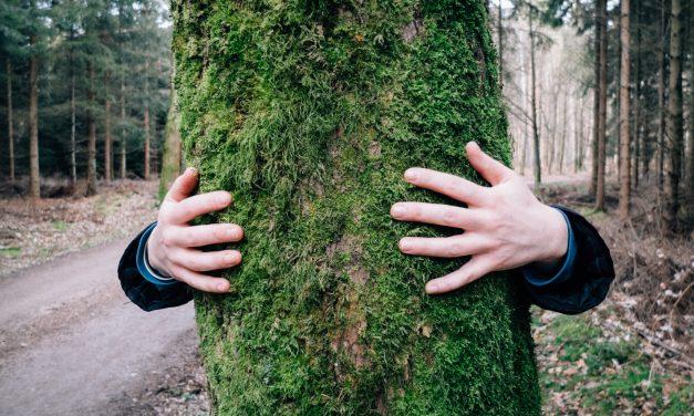 Meg akarsz gyógyulni? Ölelj meg egy fát!