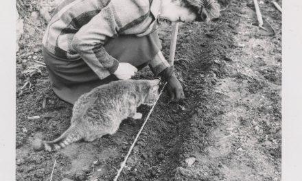 Nálatok laknak kertészkedő állatok?