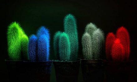 Sötétben világító növényeivel nyert innovációs díjat egy magyar feltaláló Kínában