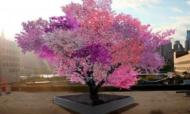 Ha a szobrász kertészkedni kezd: itt a 40 gyümölcsöt termő fa