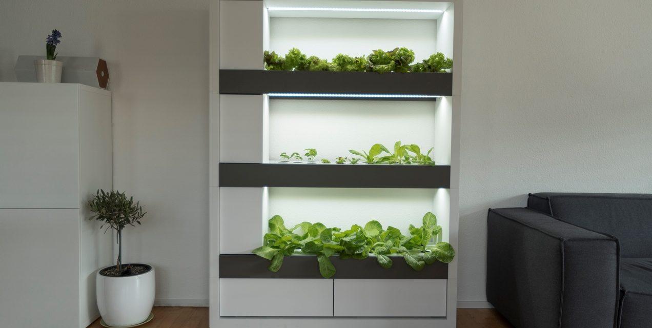 Zseniális ötlet: konyhakert a lakásban