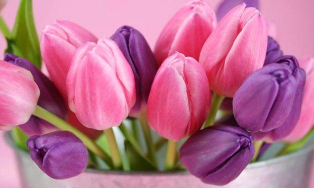 Százezer tulipán vár, hogy leszüreteld