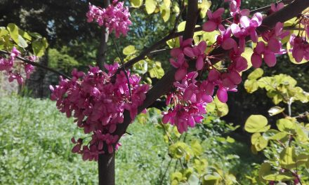 Ez a növény a törzsén virágzik?