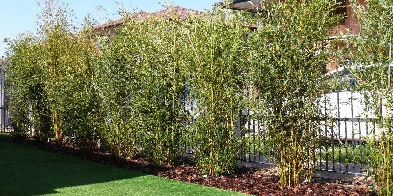 Ültess bambuszsövényt, ha elég bátor vagy
