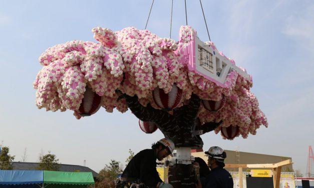 Megépült a világ legnagyobb cseresznyefája