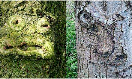 Valóság, vagy photoshop az emberi arc egy fán?