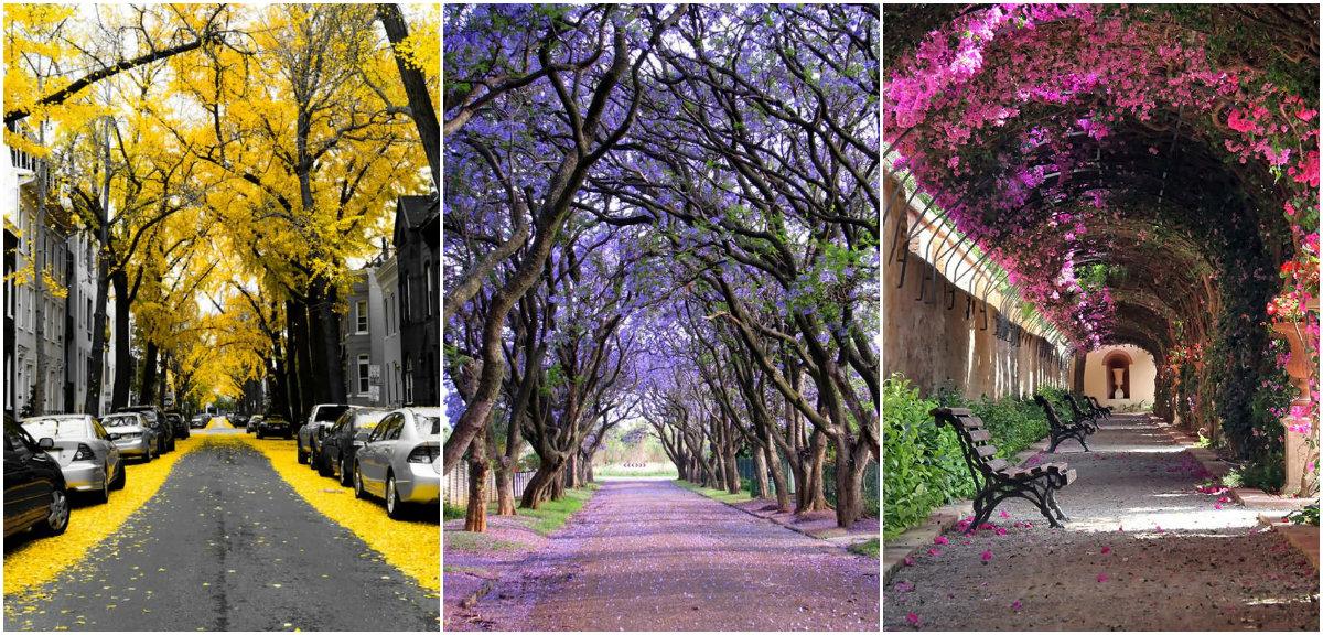 10 gyönyörű utca a fák árnyékában