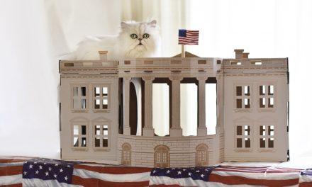 Vedd meg a Kremlt a macskádnak!