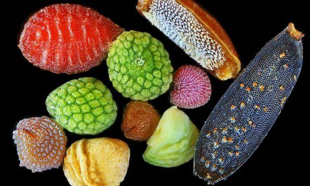 Izgalmas mikroszkopikus képek magokról