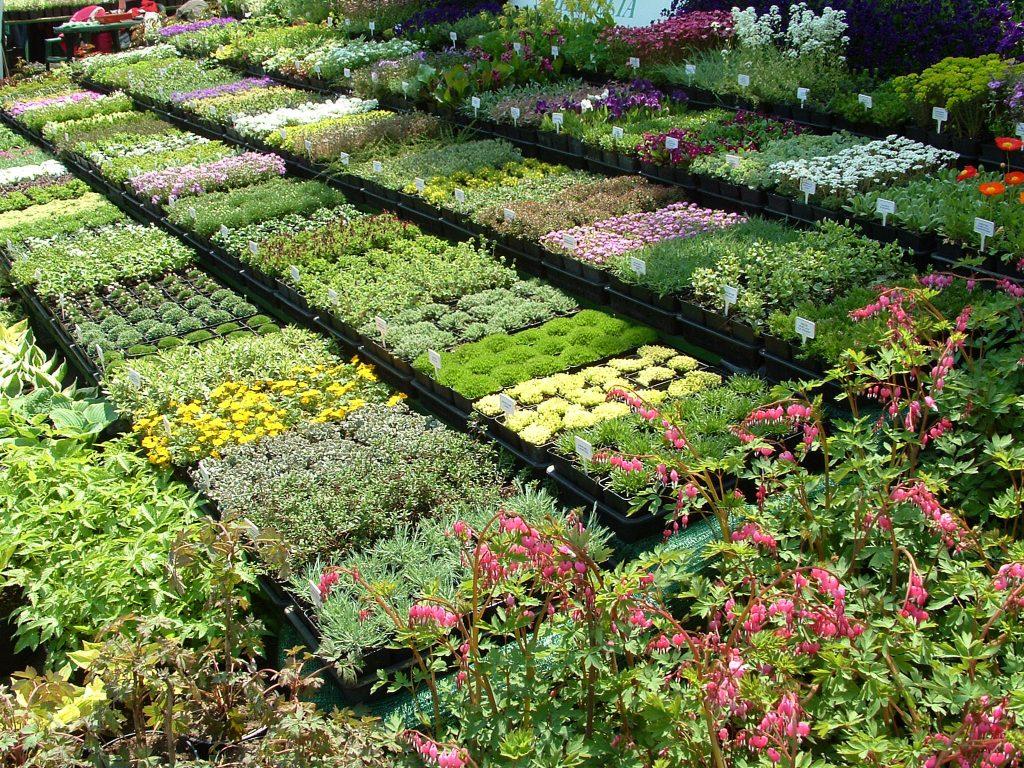 d056793bff Az egyik évelőárus tekintélyes méretű standja. Tavaszkert – Dísznövény  Szakkiállítás és Vásár
